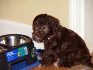 Bailey_pup