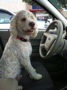 moose driving